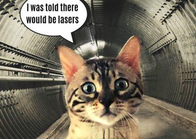 Cat in the blast tunnel